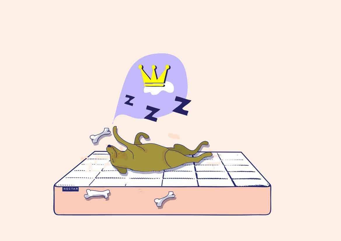 Dog in Bed Illustration