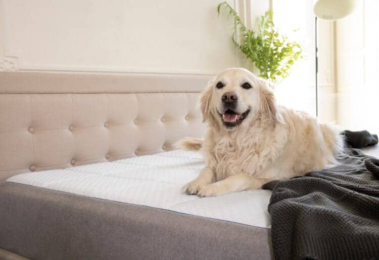 Pet-friendly Nectar Mattress