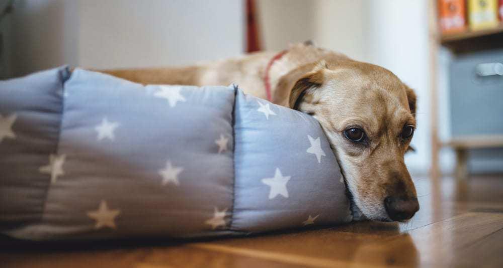 Get a pet bed