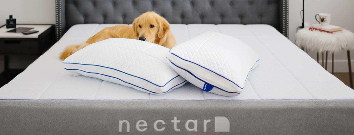 Nectar Puppy