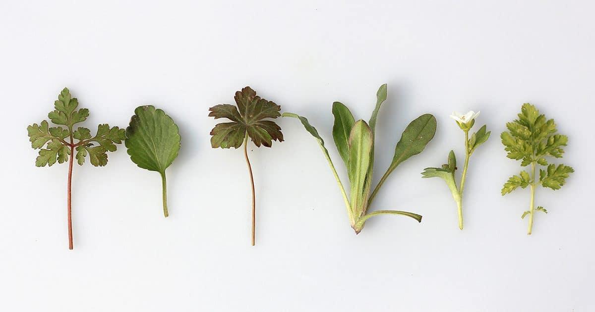 Herbs For Sleep – Top 5 Best Herbs To Improve Your Sleep
