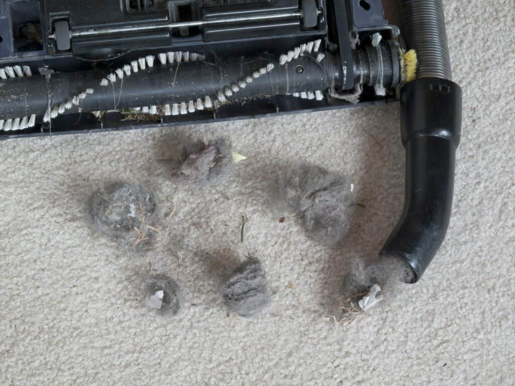 Dog's Fur After Vacuuming its Bed