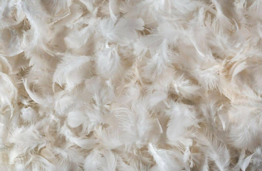 Feather Pillow Stuffing