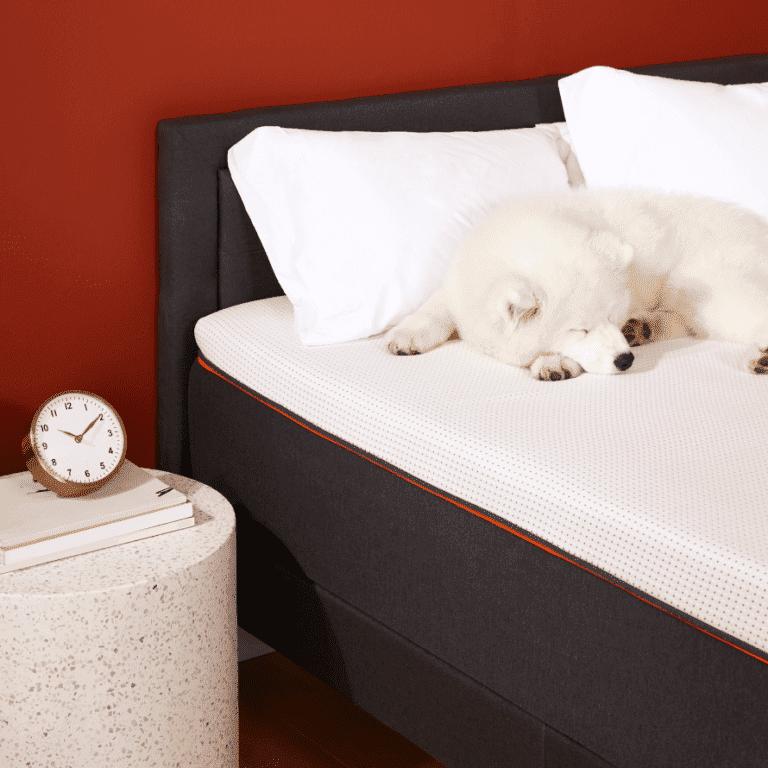 "a white dog sleeping on queen bed measuring 60"" x 80"" (standard queen mattress size 60"" x 80"")"