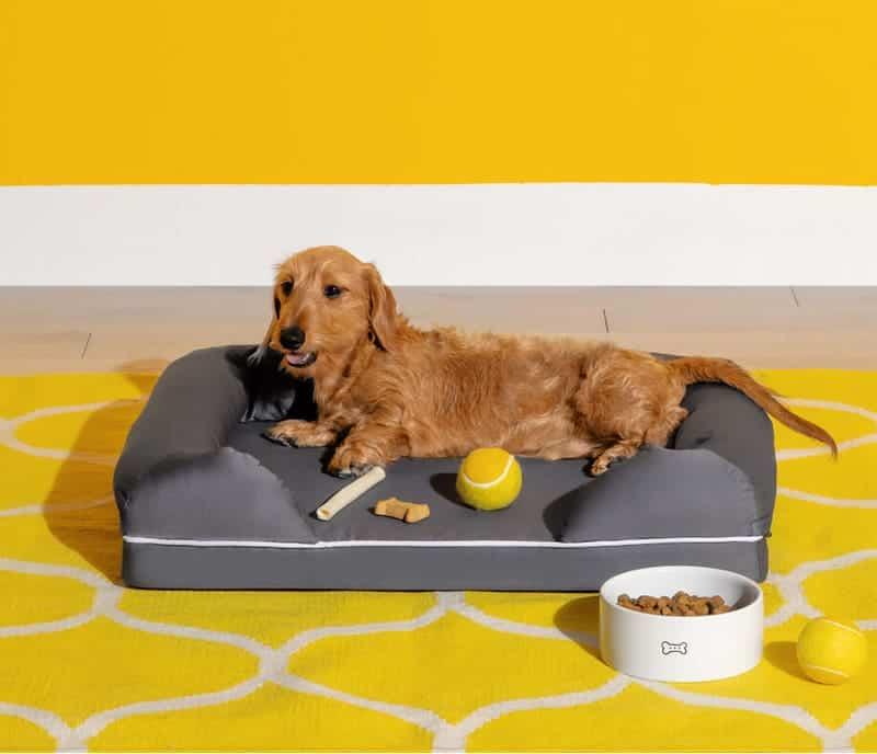 A Dog sitting on a Nectar Dog Bed