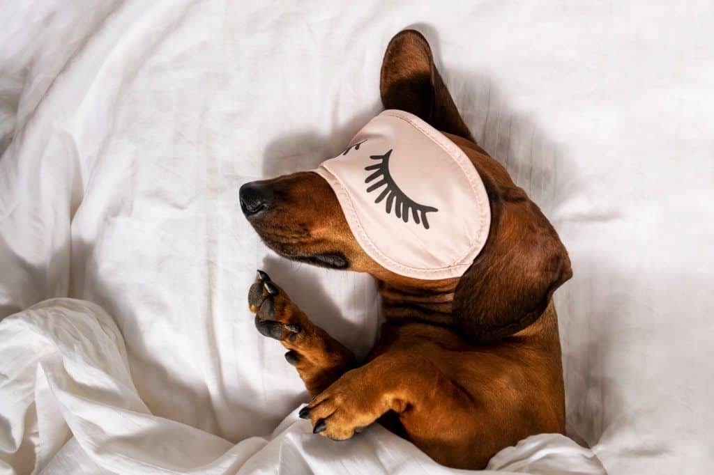 A dog is resting in a white bed and wearing pink glasses for sleeping