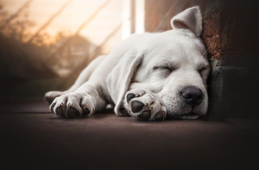 young cute dog is sleeping outdoors